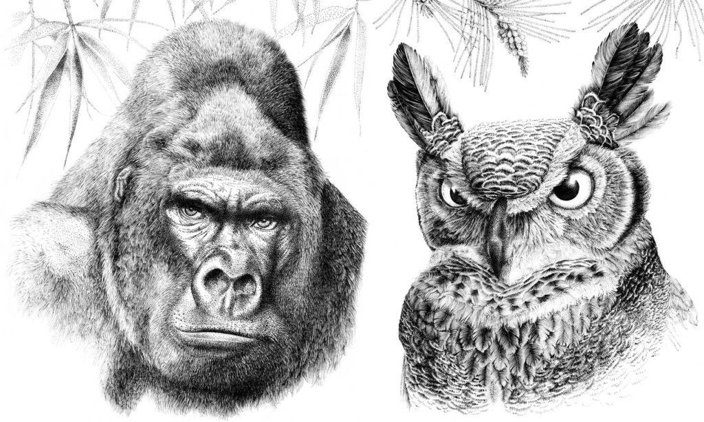 illustratrice botanique